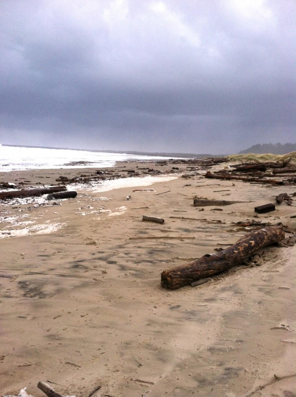 Woody debris dominated the beach.  Towards the southern end of the mile,  there was no dune erosion.