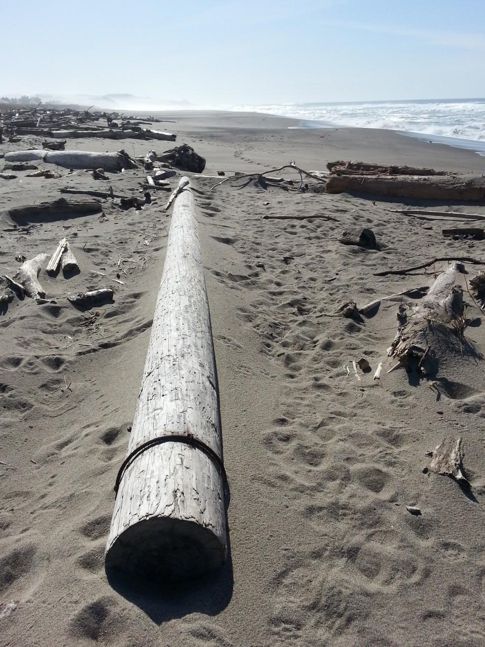 Telephone pole among the driftwood