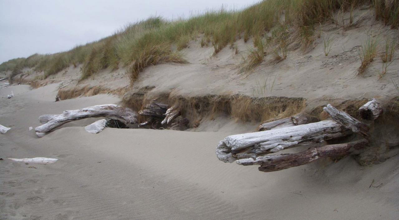 Typical dune erosion in Mile 105.