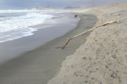 The photo shows some of the steep bank from the foredune to the wet sand beach.  This is a new phenomenon for this mile.