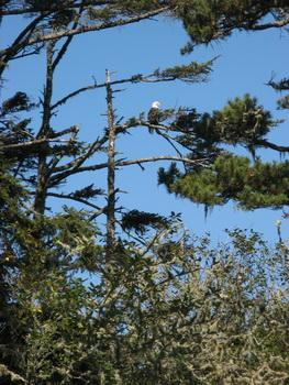 Photo of eagle at Sand Lake.
