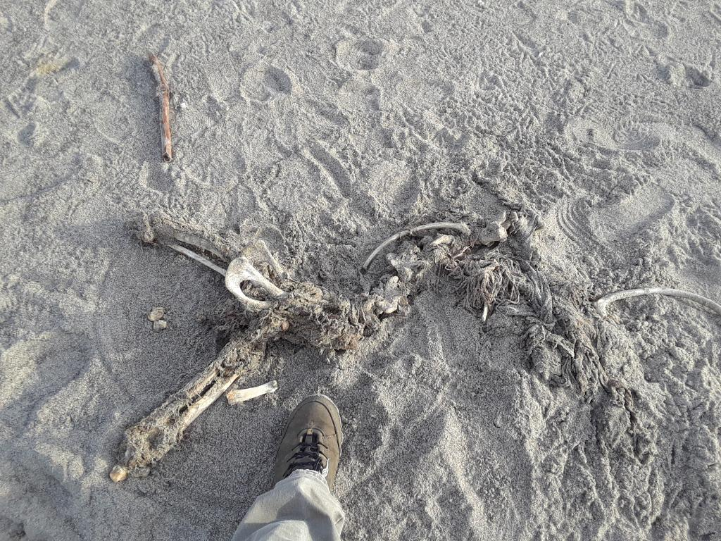 Remains of sea lion first reported Dec 5.