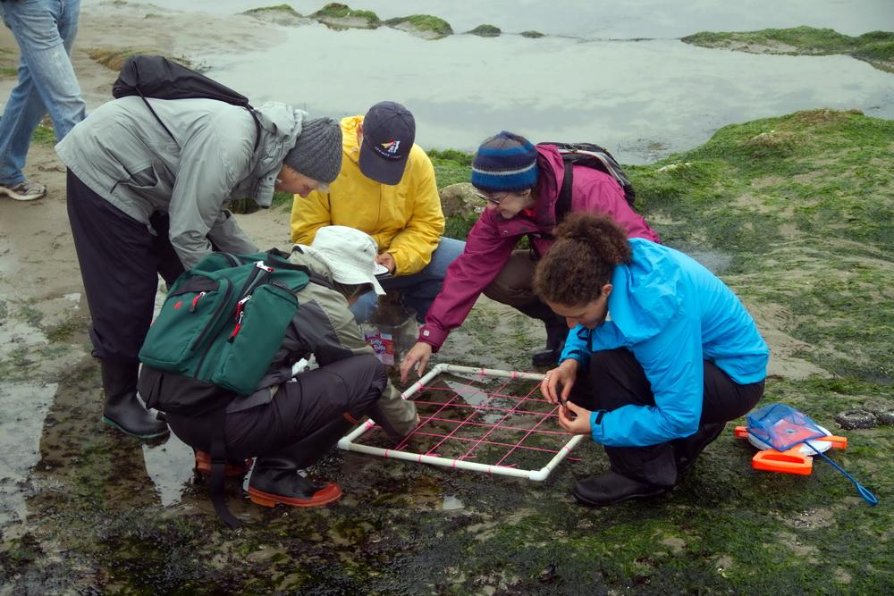 Photo of students studying a sample area on the coast, by Michael Coe.