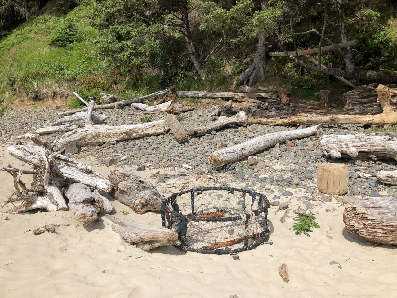 driftwood and crab trap