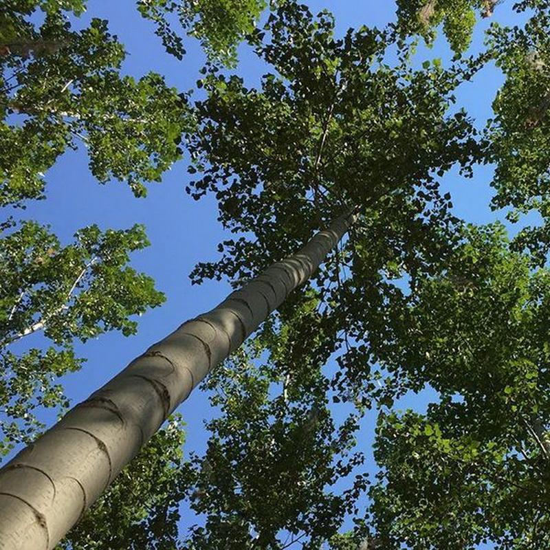 Carbon storage units, aka trees.