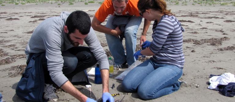 COASST beached bird survey volunteers at work.\Photo by Penelope Chilton.