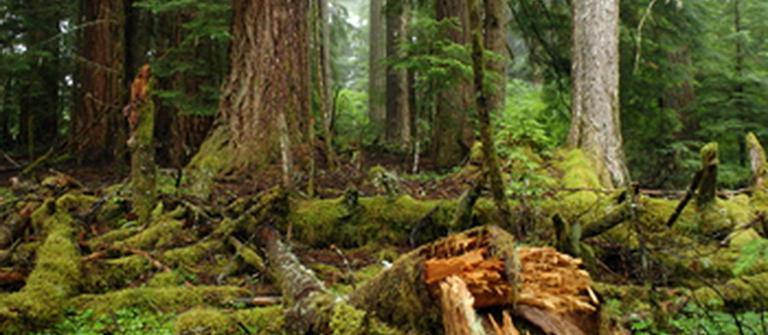 Coastal forest habitat.  Photo courtesy of U.S. Forest Service.