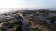 Tide pool mile 209