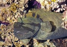 Rock or Eel fish