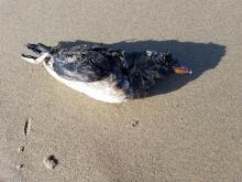 Unidentified dead bird