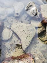 worm trails on tide pool rocks