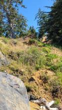 more of the landslide