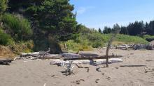 remains of surfer's camp structure