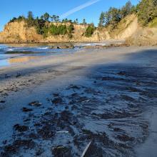 Minimal beach wrack