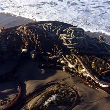 kelp bundle w/ rope