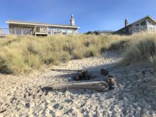 Fire pit near beach grass