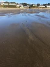 Low tide surf line looking east