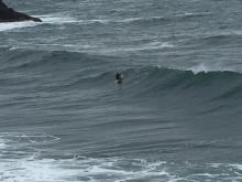 Surfer near the cove during king tide