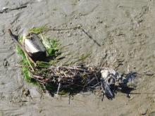 Seabird remains