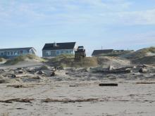 Bobcat dumping sand onto dunes