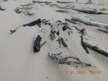 Bonfire remains near dunes