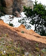 Cliff at Devil's Punchbowl State Park