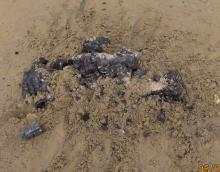 Campfire Remains on Beach