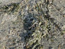 cellophane worm casings