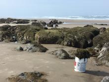 Collecting sea weed