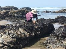 Lady collecting sea weed