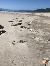 Numerous crab shells