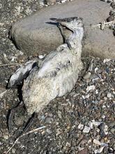 Closer view of the dead bird