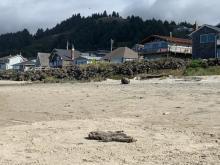 dead marine mammal