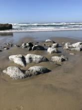 Higher tides exposing more rocks on beach