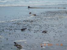 Rocky driftline