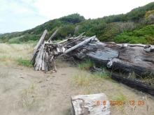 Driftwood leanto, before