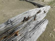 Driftwood log and rusted spikes