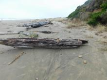 Driftwood log with memorial stones