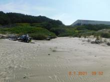 Looking from beach to Driftwood Wayside access path, 8/1/2021