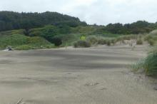 Looking from beach to Driftwood Wayside access path 6/6/2020