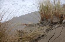 Foredune erosion