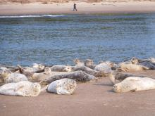 Happy harbor seals.