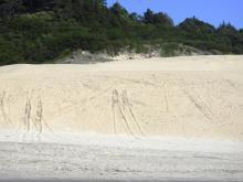 tracks up dune