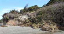 vegetated dune erosion