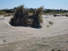 Dune formation