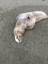 Dead pinniped.