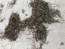 Typical mix of seaweed, plastic, wood and other particles.