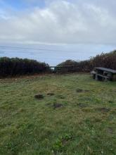 Shrubs lining the picnic area and path to beach have been trimmed