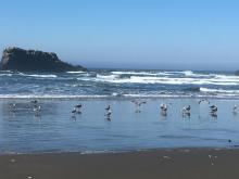 Sea birds at low tide