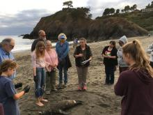 Dr. Dawn Golay preparing for stranding report protocols-Juvenile Stellar Sea Lion, female